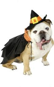 dog as a witch costume