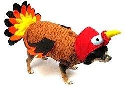 dog turkey costume