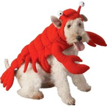 pet lobster
