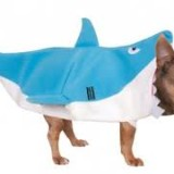 dog shark full body